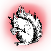 drawing red squirrel